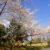 【最新版】今年は少し遅め!?桜の開花情報